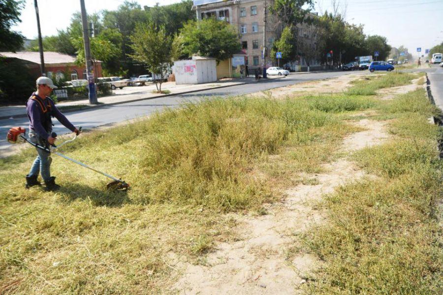 Астрахань чистят от сорняков