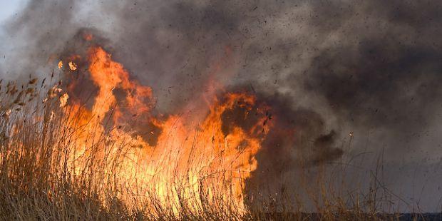 В Астрахани загорелся тростник