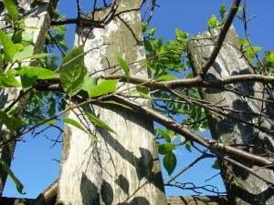 Астраханцам снова придется ограничить свое пребывание в лесах
