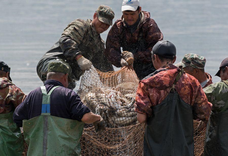 Астраханские рыбаки выловили в этом году 43 тысячи тонн рыбы