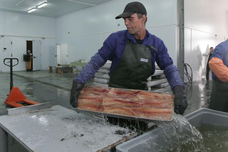 Более 50 тысяч тонн астраханской рыбы отправили в другие регионы