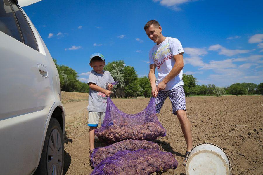 Горожане снова смогут самостоятельно вырастить себе картошку
