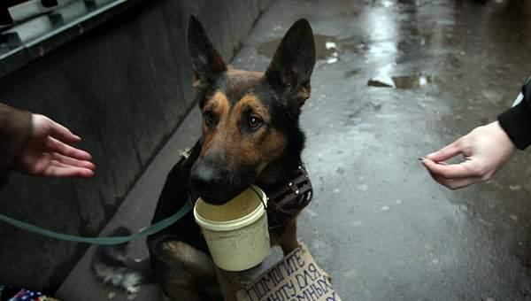 В Астрахани хотят открыть памятник бездомной собаке