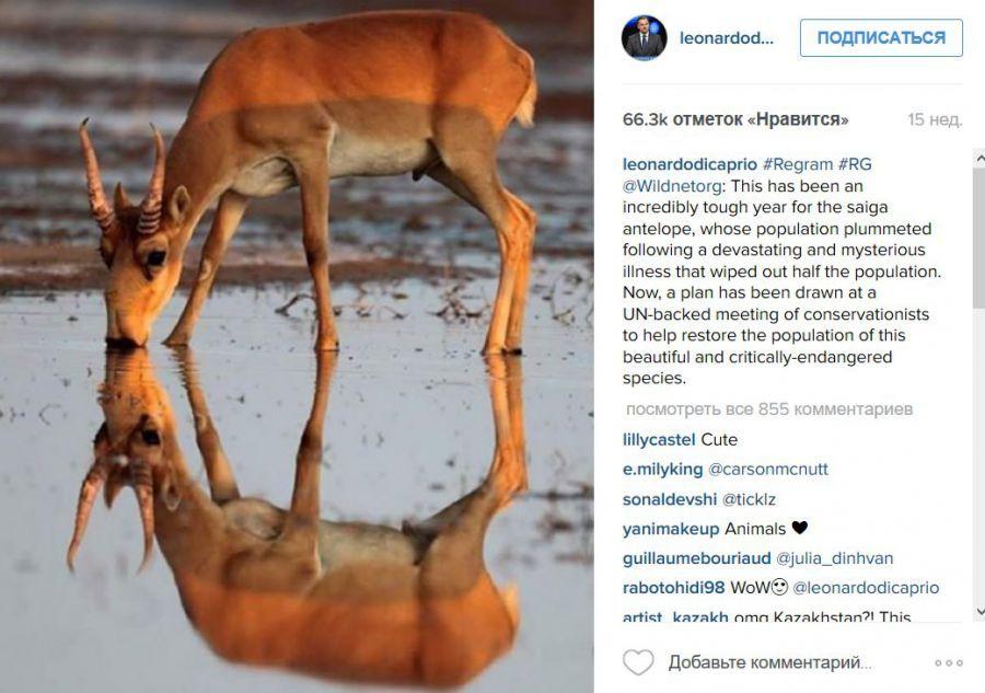 Леонардо Ди Каприо выложил в Instagram снимок астраханского фотографа