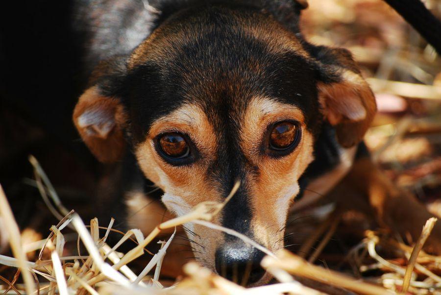 Пьяный астраханец требовал от врачей «скорой» реанимировать собаку