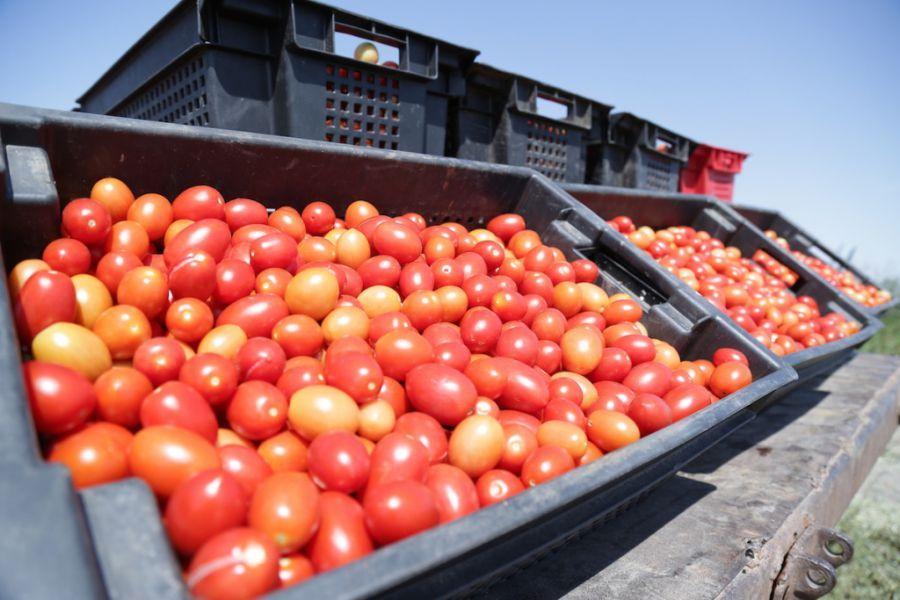 Хронология астраханской «битвы» за томат-пасту