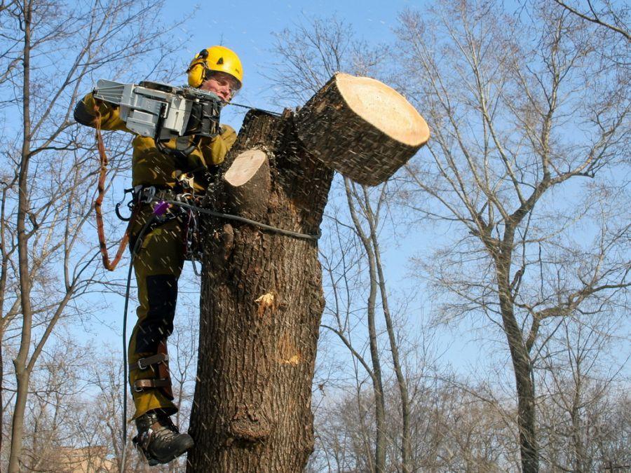 В Астрахани попилят деревья на 1,3 млн рублей