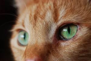 Астраханский полицейский вызволил кошку из плена