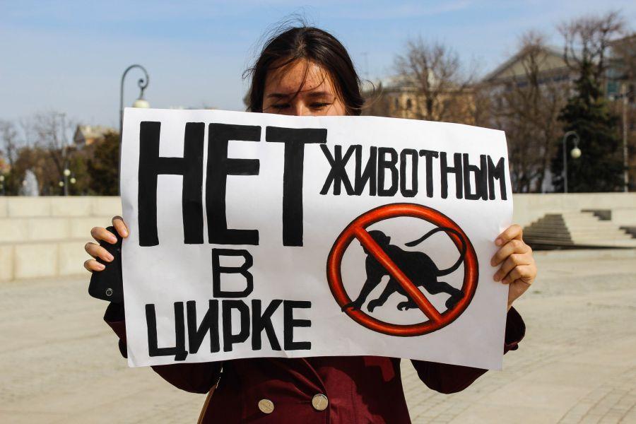 Астраханцы собираются митинговать против цирка
