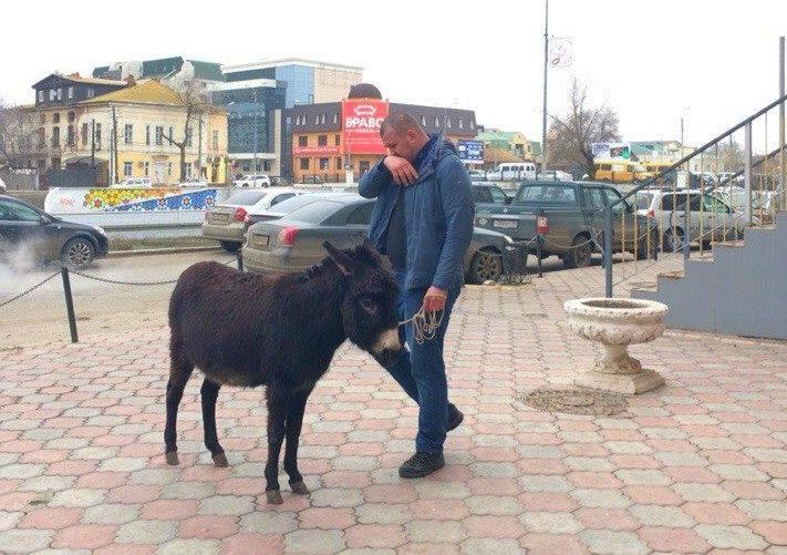 В центре Астрахани потерялась ослица