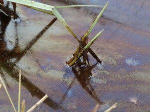 Нефтяные «Соколовские ямы» в Астраханской области наконец-то ликвидируют