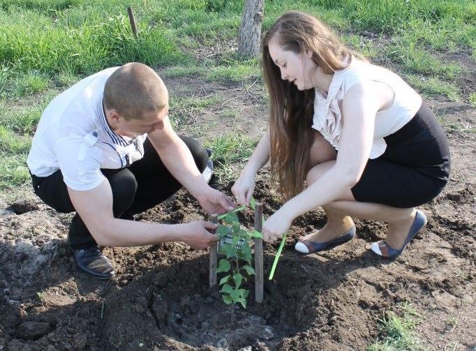 Молодожены сажали березки на улицах Астрахани