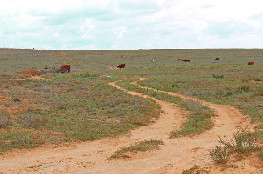 На сельские дороги Астраханской области дадут всего 18 млн рублей