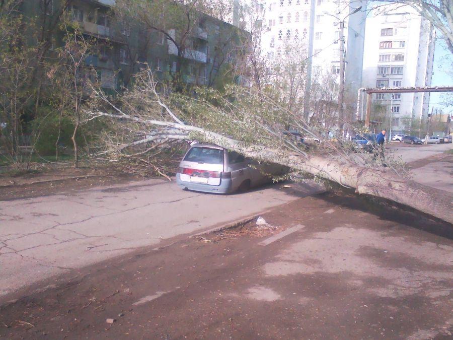 На улице Курской дерево придавило автомобиль