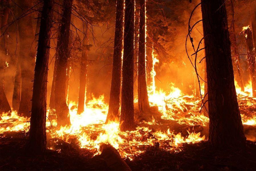 Противопожарный режим в астраханских лесах продлили