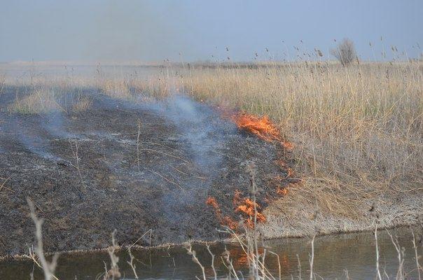 14 глав сельских поселений ответят за поджоги камыша