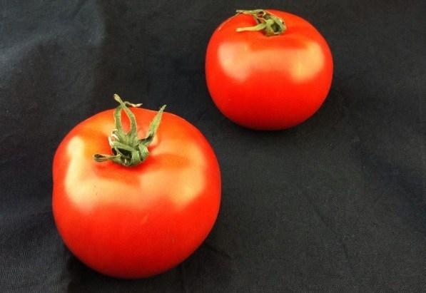 Свою томатную пасту в Астраханской области ждут в августе