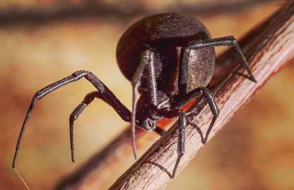 Астраханцы опасаются нашествия пауков