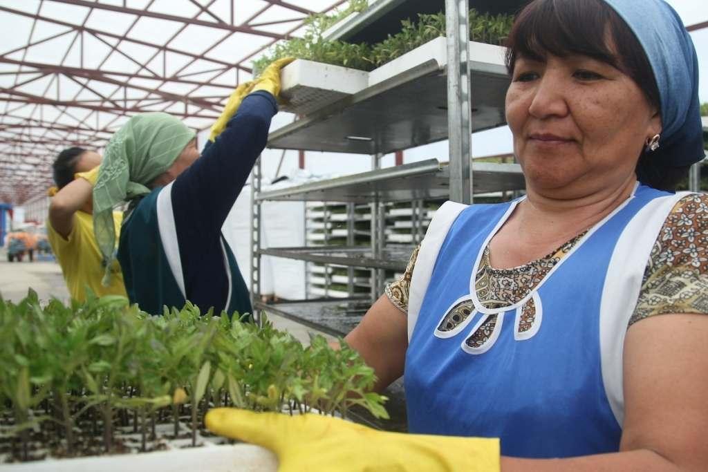 Александр Жилкин осмотрел завод томатной пасты в Харабалинском районе