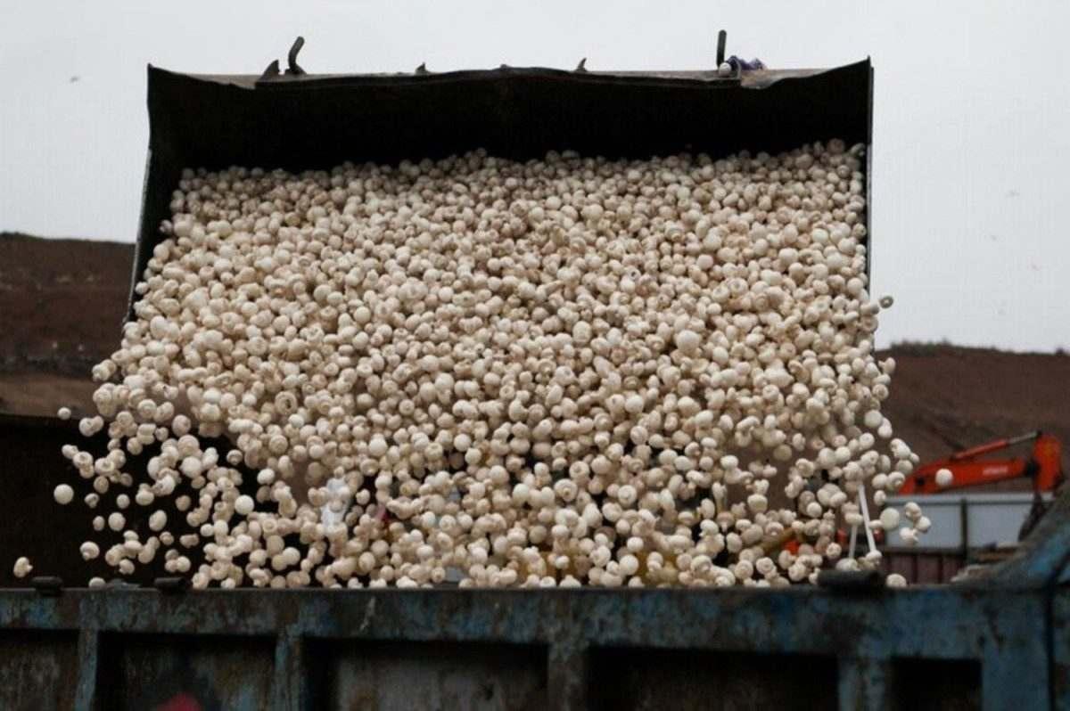 В Астраханской области под пресс пошло около тонны санкционных грибов и салата