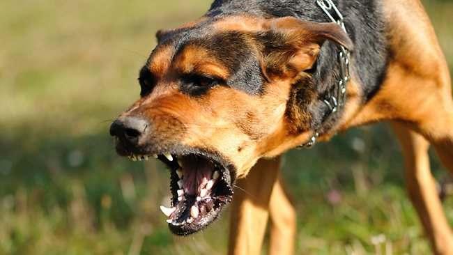 Хозяин загрызшей пятилетнюю девочку собаки заплатит штраф