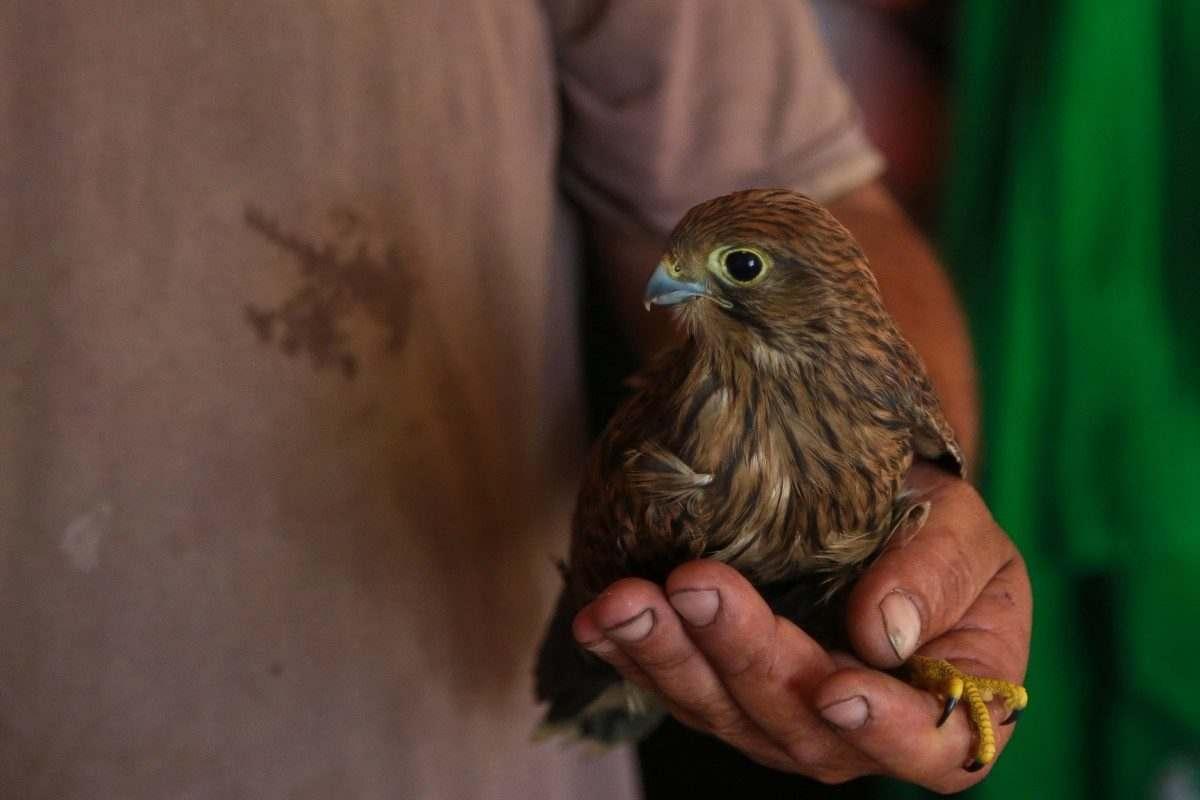 Астраханец спас застрявших в вагоне птенцов сокола
