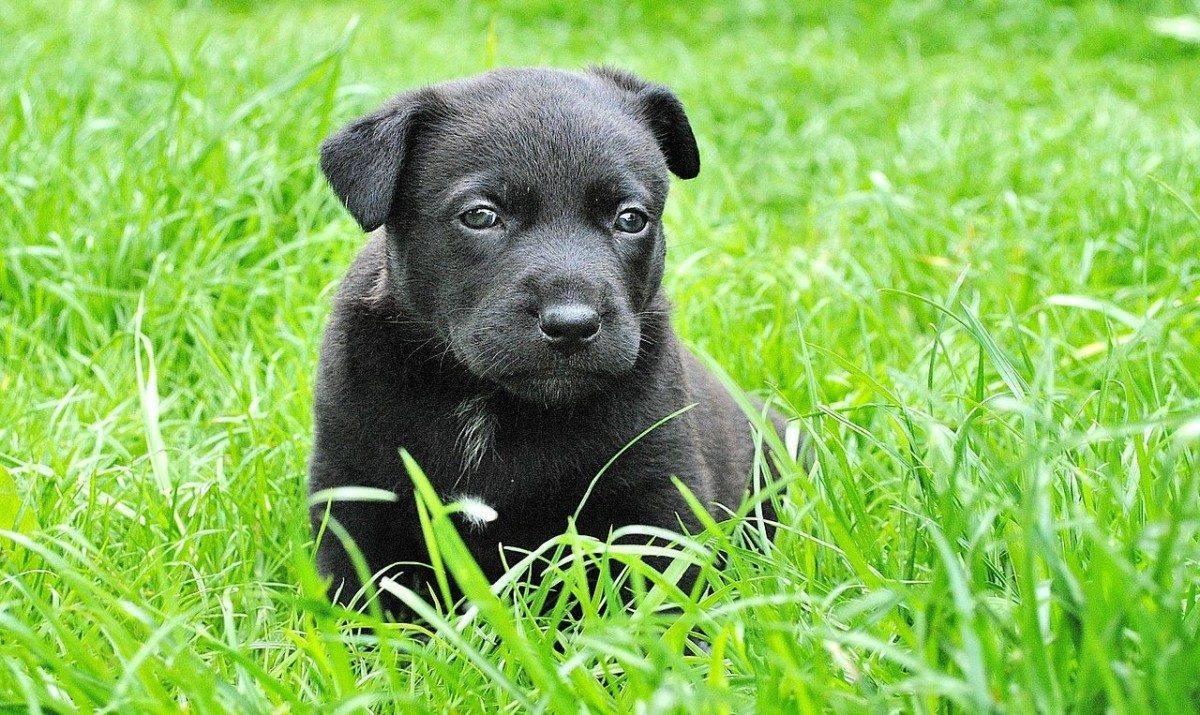 Астраханский приют для бездомных животных снова просит о помощи