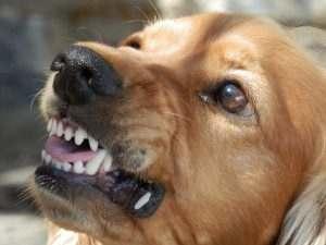 Собака оставила жителей Астраханской области без воды