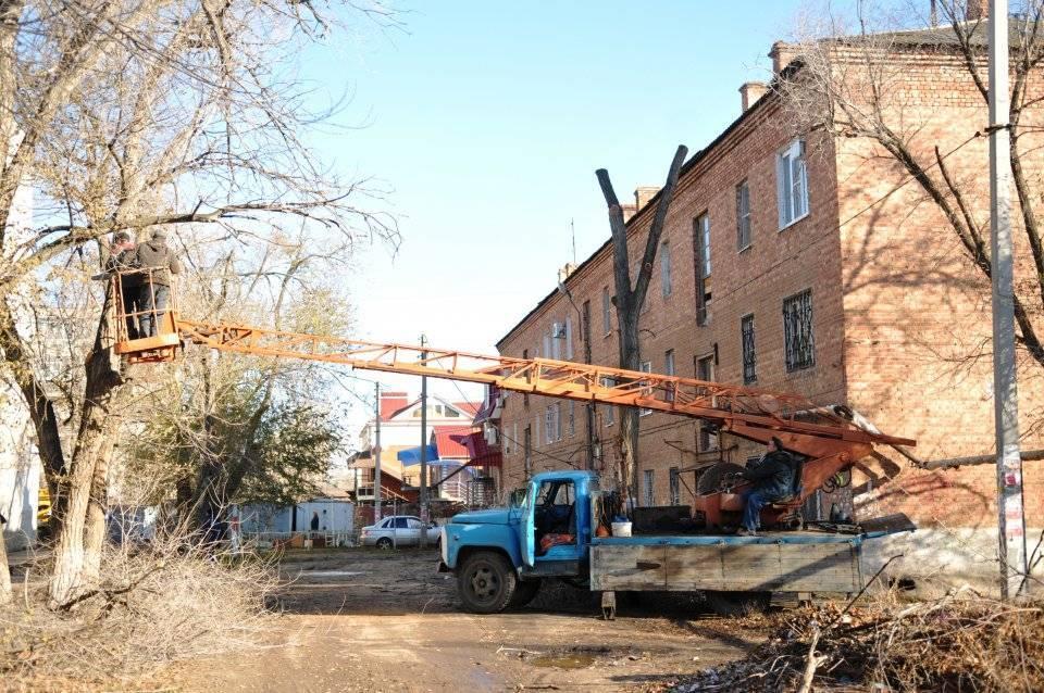 С начала года в Астрахани опилили 7 тысяч деревьев и опилят еще