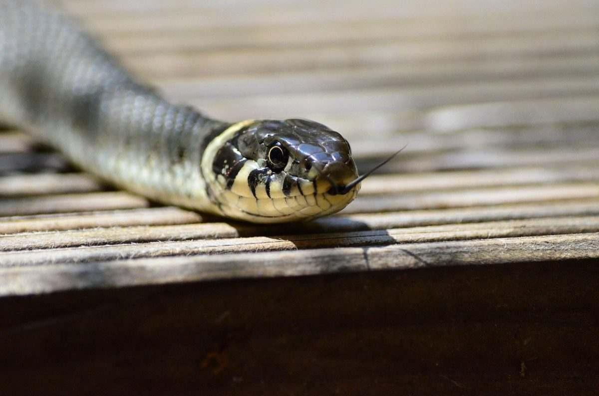 На астраханского пенсионера в центре города упала змея