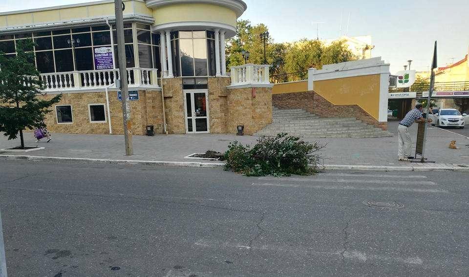 В центре Астрахани сбили дерево