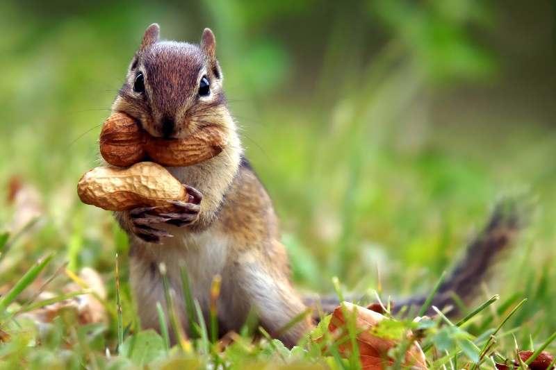 Астраханские фермеры попробуют вырастить арахис