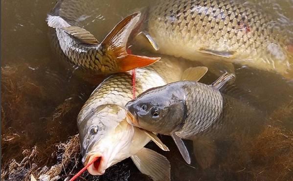 Рыбакам не хватает рыбы в реках Астраханской области