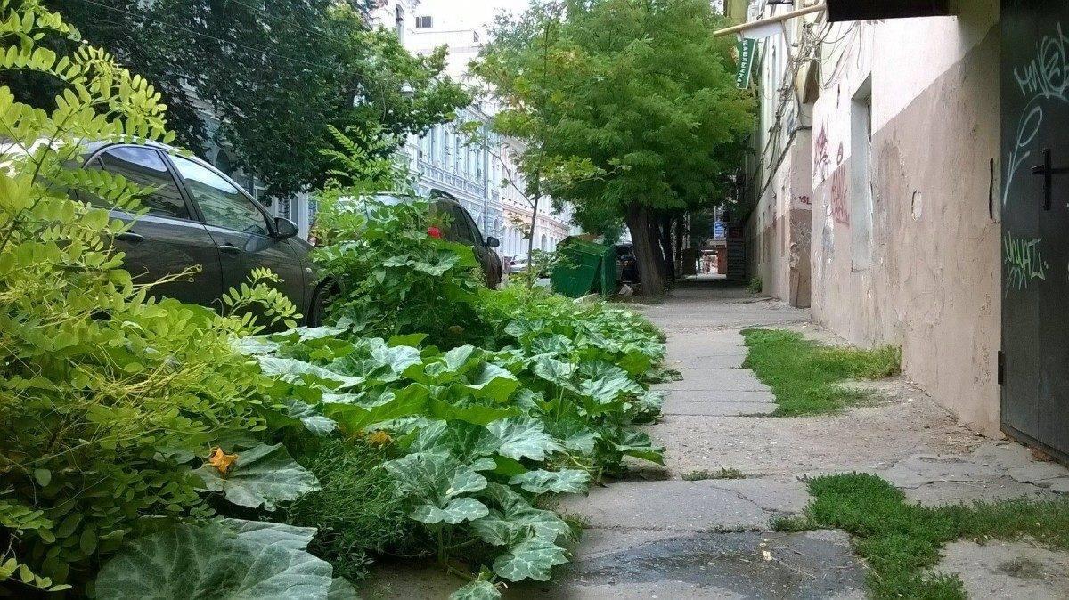 В центре Астрахани выросла тыква