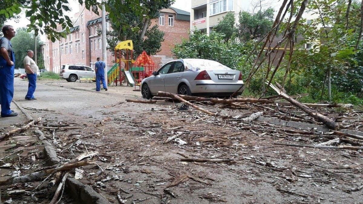 В Астрахани упавшее от ветра дерево повредило иномарку