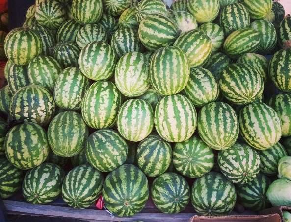 Астраханские аграрии произвели более полумиллиона тонн растениеводческой продукции