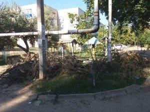 Жители микрорайона III Интернационала просят убрать сухие ветки