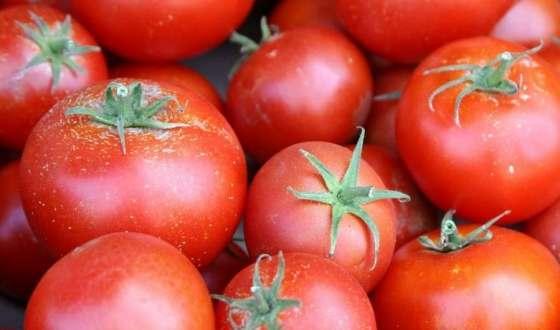 Специалисты из Италии готовят завод томатной пасты к началу работы
