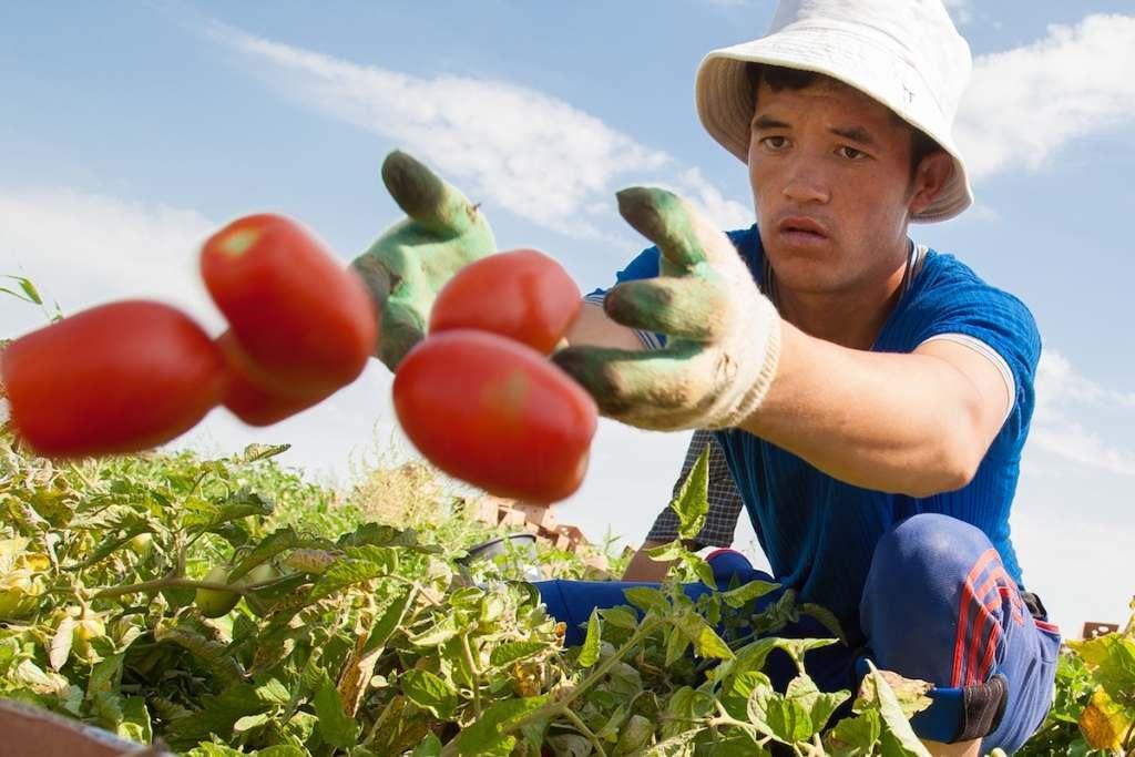 Черноярские аграрии порадовали губернатора своими успехами
