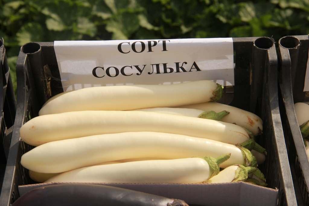 Астраханские селекционеры продолжают удивлять