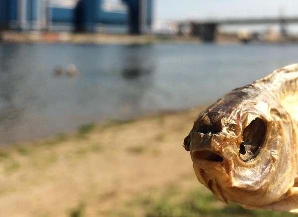 Астраханцев предупреждают о гельминтах в купленной без документов рыбе