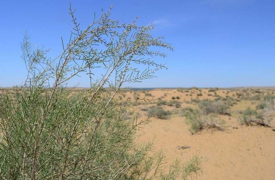 На плодородные земли Астраханской области наступает пустыня