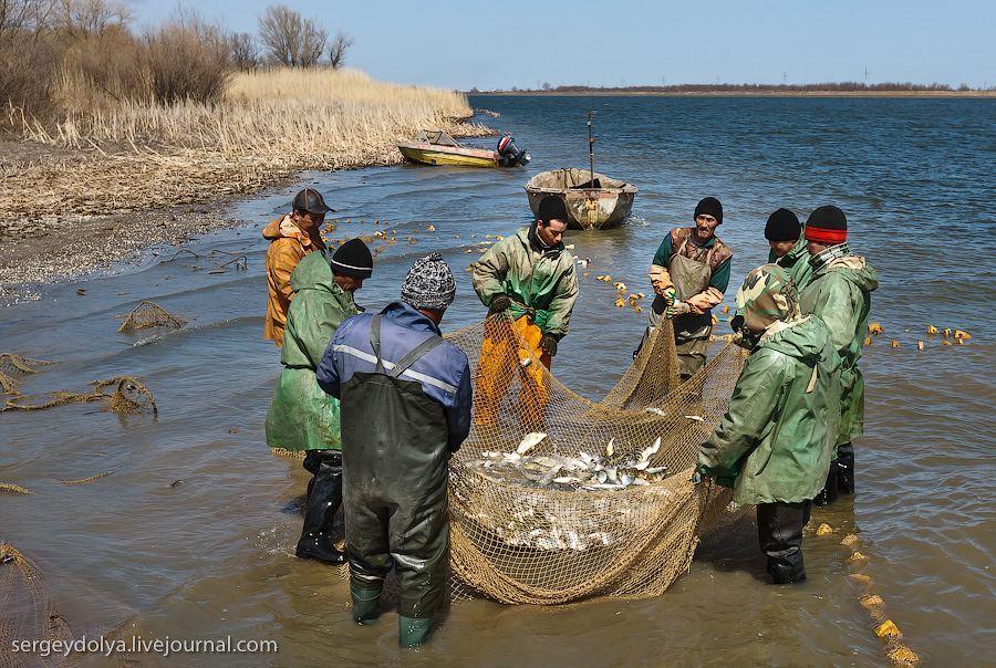 Астраханские рыбаки-промышленники украли рыбу из улова