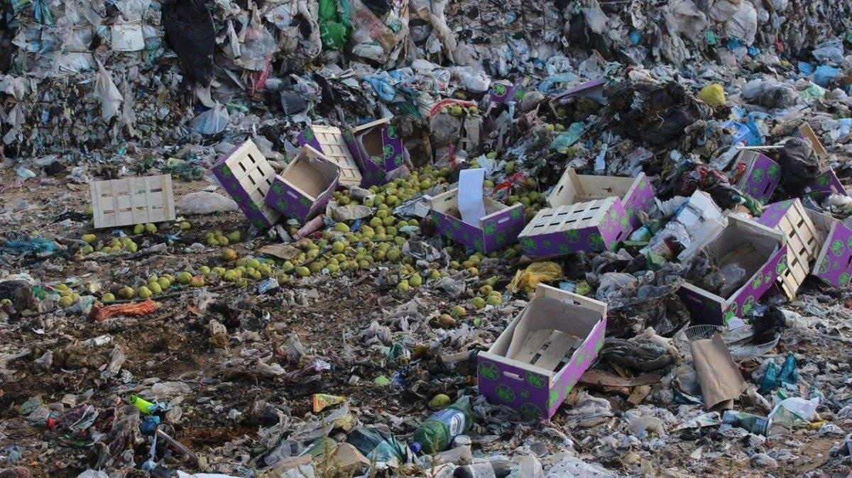 Из Астраханской области не выпустили 500 кг польских груш