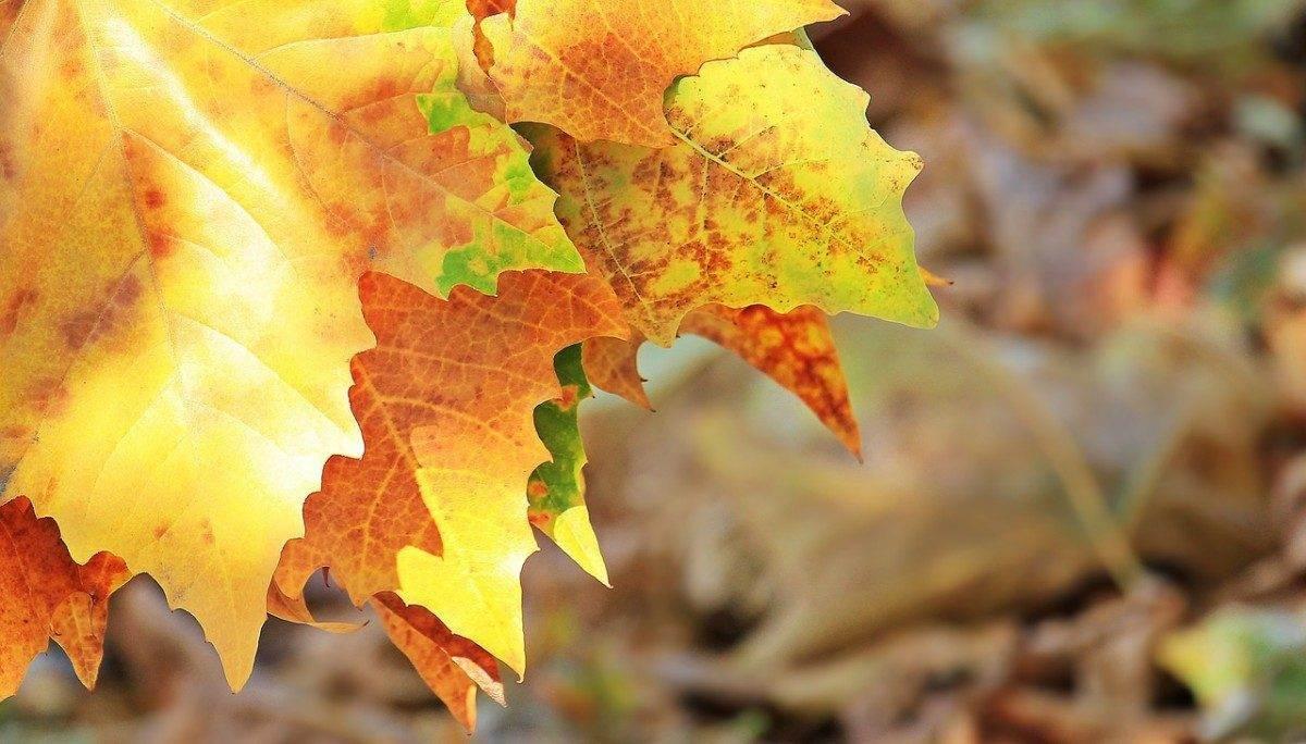 Сентябрь в Астрахани пройдет в пределах климатической нормы