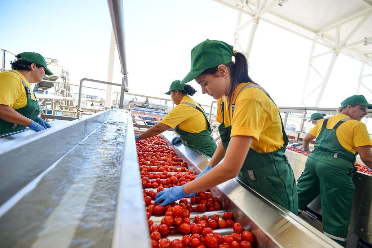 Достройка завода томатной пасты требует еще 3 млрд рублей