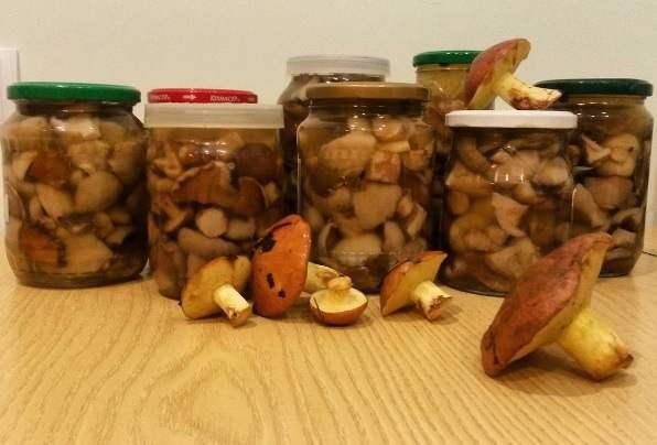 Астраханцы начинают травиться грибами