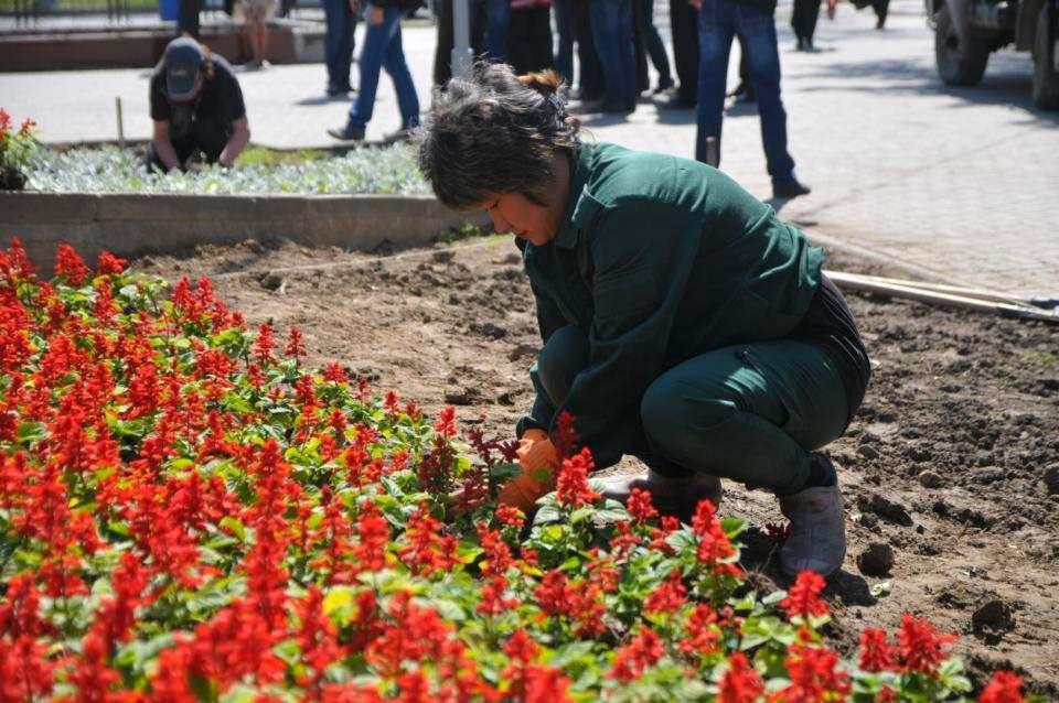 К 9 мая в Астрахани высадят около полумиллиона цветов