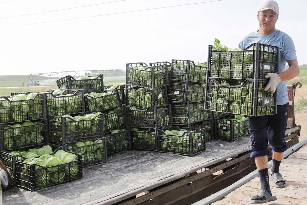 Чиновники готовятся отчитаться об 1,5 млн тонн собранного урожая