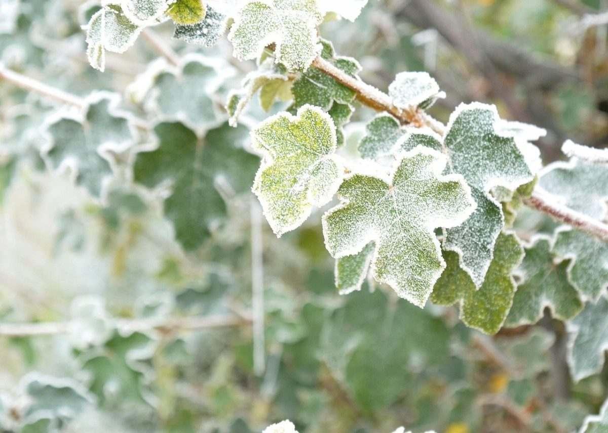 В Астрахань пришли морозы